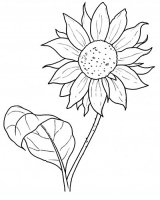 Disegni Fiori.Tulipano Disegni Da Colorare Per Adulti E Ragazzi